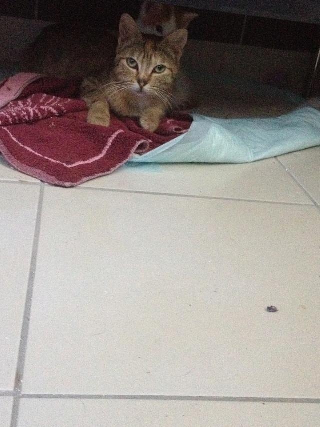 Portée 4 chatons Img_3026