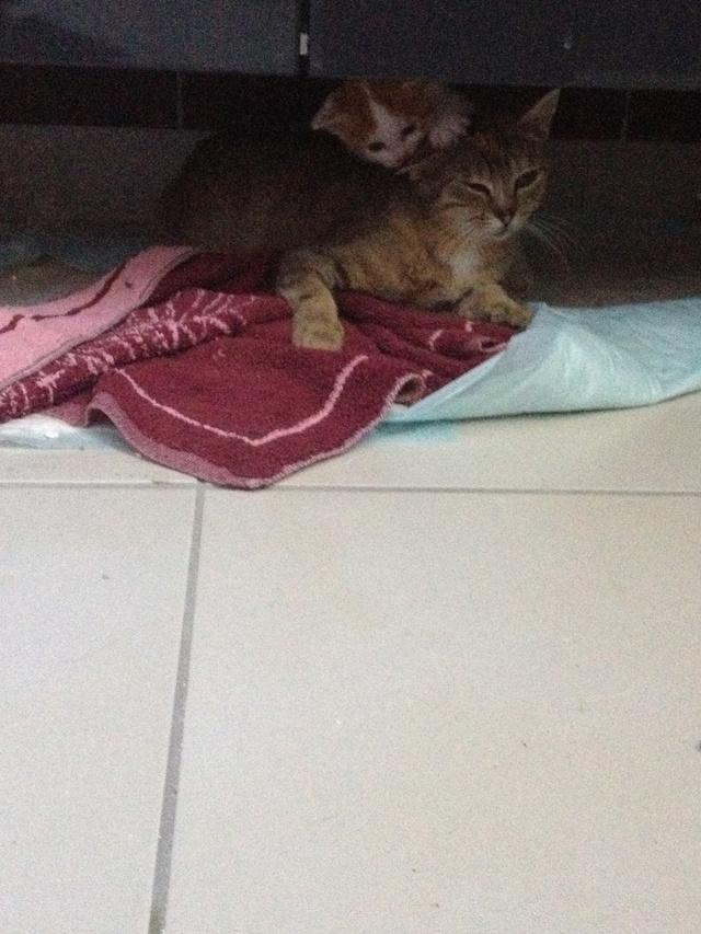 Portée 4 chatons Img_3027