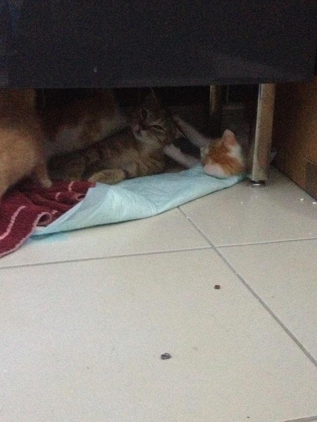 Portée 4 chatons Img_3028