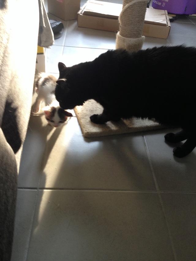 Portée 4 chatons Img_3030