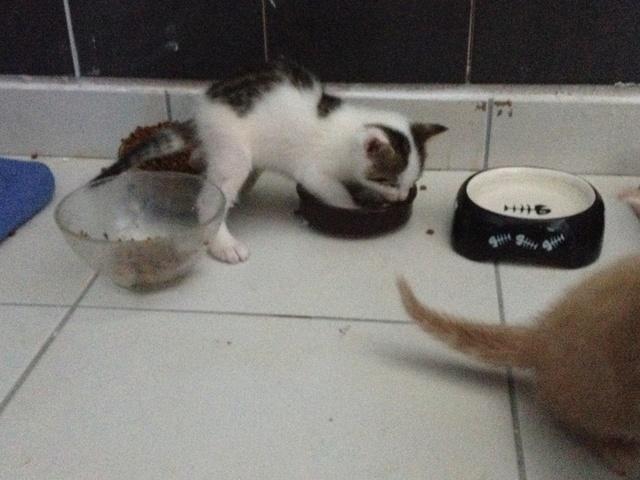 Portée 4 chatons Img_3031