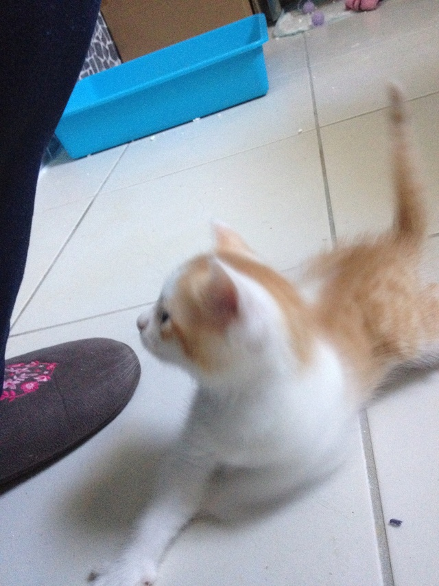 Portée 4 chatons Img_3032