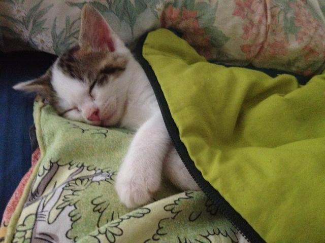 Portée 4 chatons Img_3119