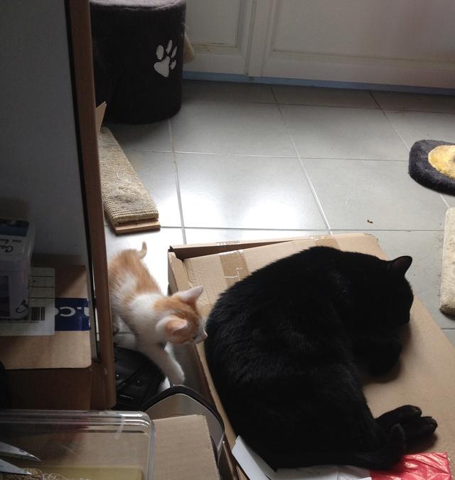 Portée 4 chatons Img_3122