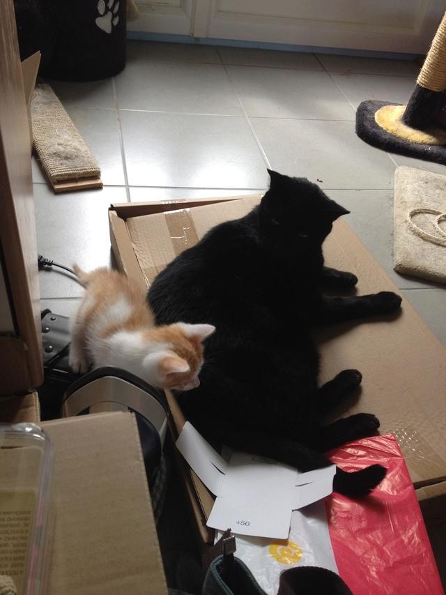 Portée 4 chatons Img_3123