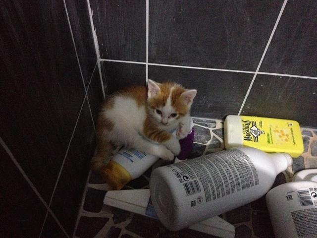 Portée 4 chatons Img_3127