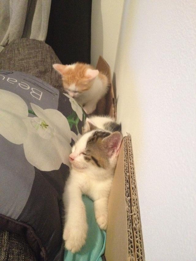 Portée 4 chatons Img_3130