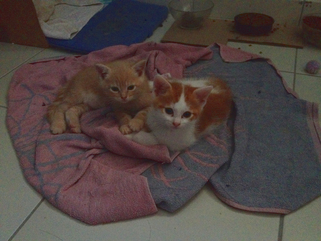 Portée 4 chatons Img_3132