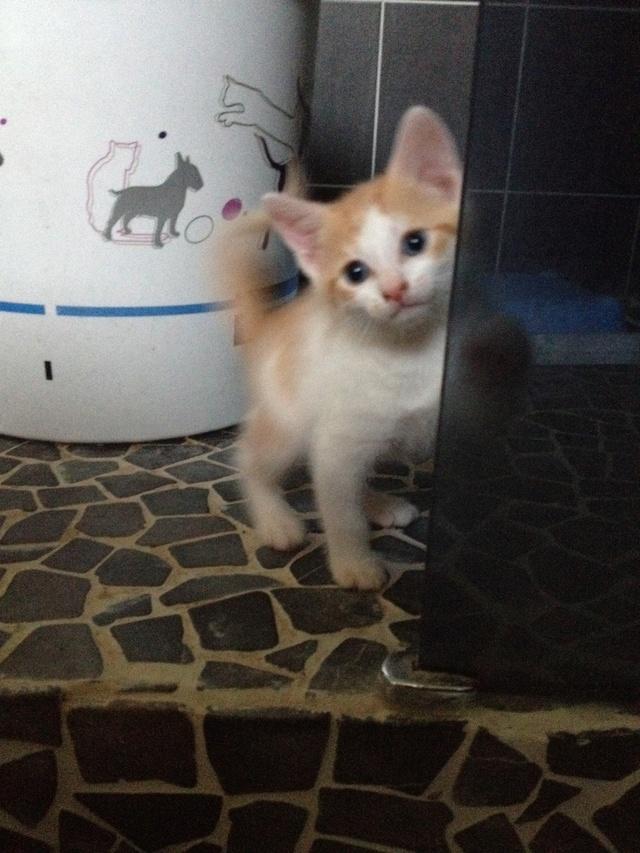 Portée 4 chatons Img_3134