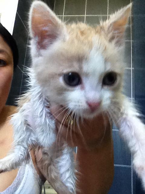 Portée 2 chatons Img_3135