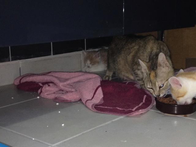 Portée 2 chatons Img_3136