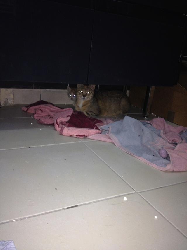 Portée 2 chatons Img_3137