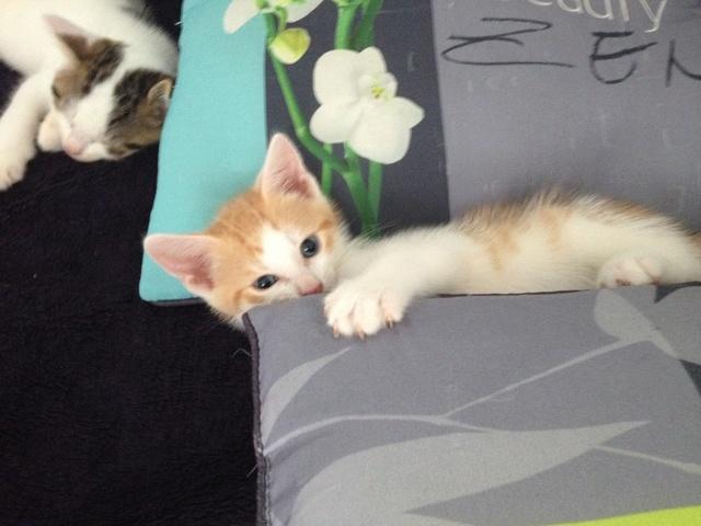 Portée 4 chatons Img_3141
