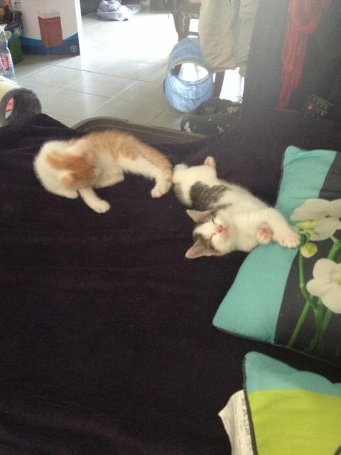 Portée 4 chatons Img_3143