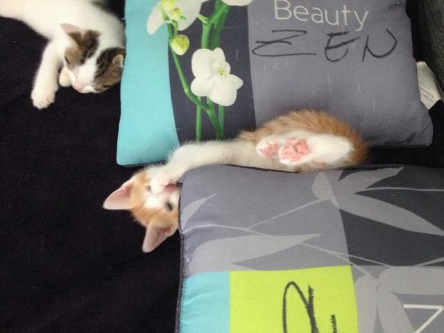 Portée 4 chatons Img_3144