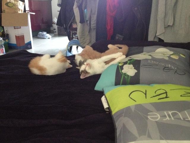 Portée 4 chatons Img_3147