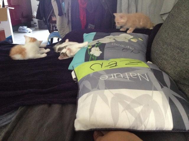 Portée 4 chatons Img_3148