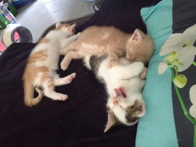 Portée 4 chatons Img_3151