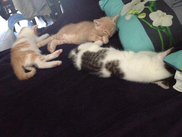 Portée 4 chatons Img_3152