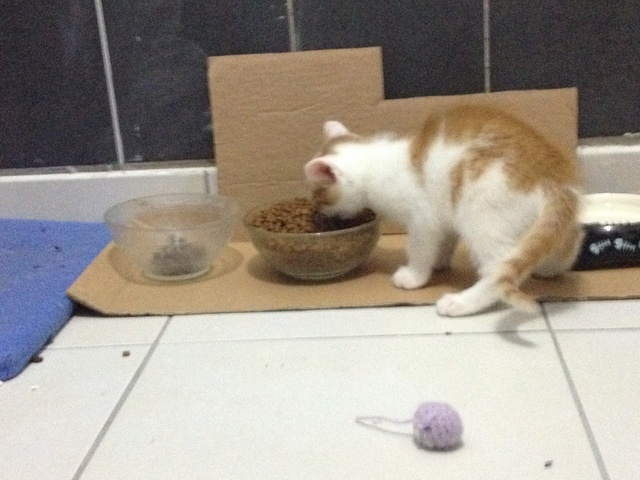 Portée 4 chatons Img_3153