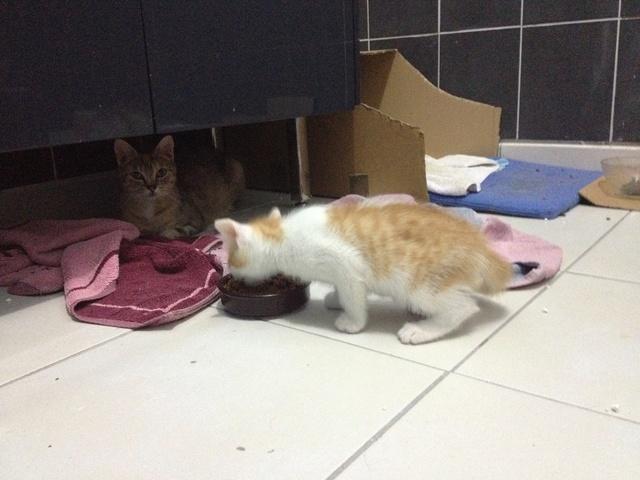 Portée 4 chatons Img_3154