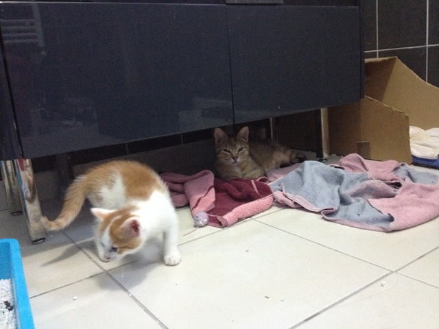 Portée 4 chatons Img_3156
