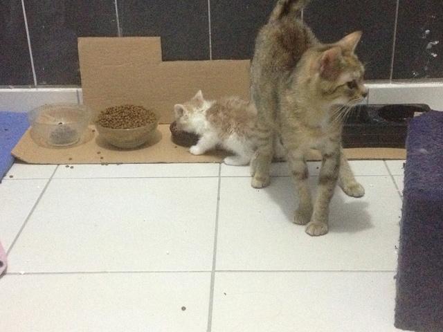 Portée 2 chatons Img_3214
