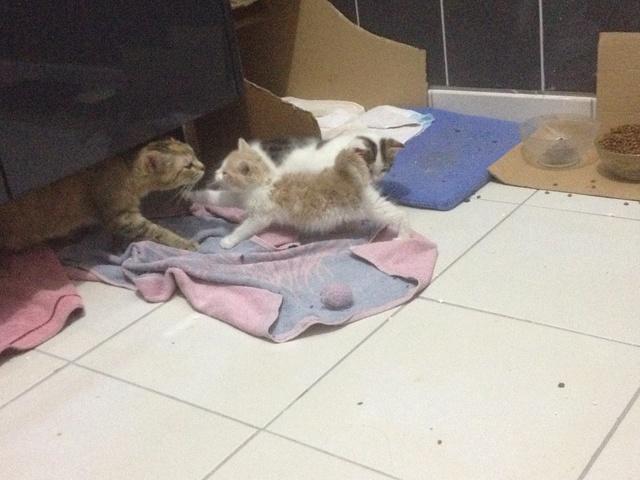 Portée 2 chatons Img_3220