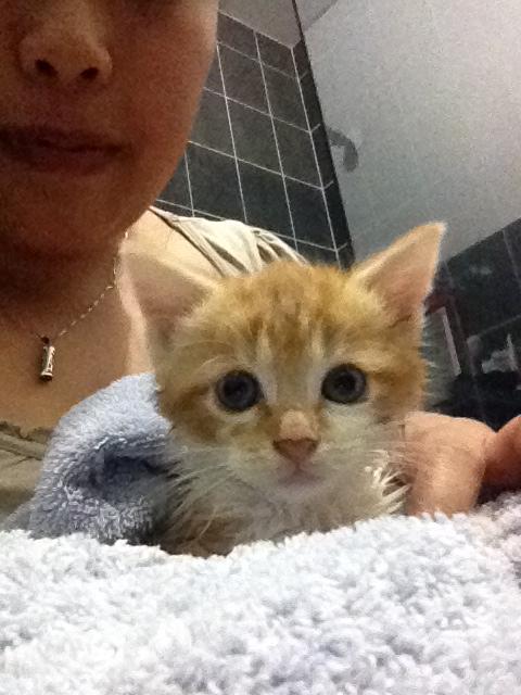 Portée 2 chatons Img_3221
