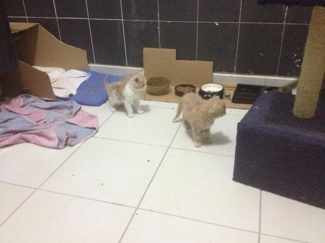 Portée 4 chatons Img_3222