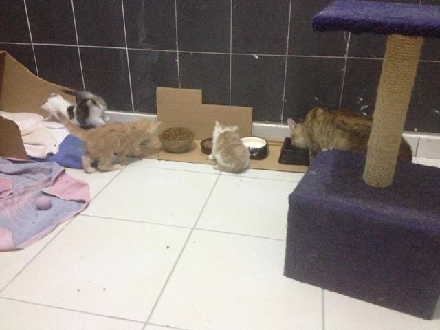 Portée 4 chatons Img_3223