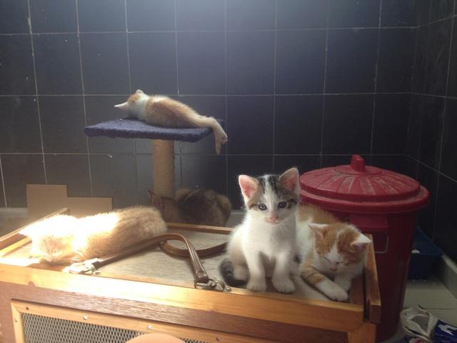 Portée 4 chatons Img_3225