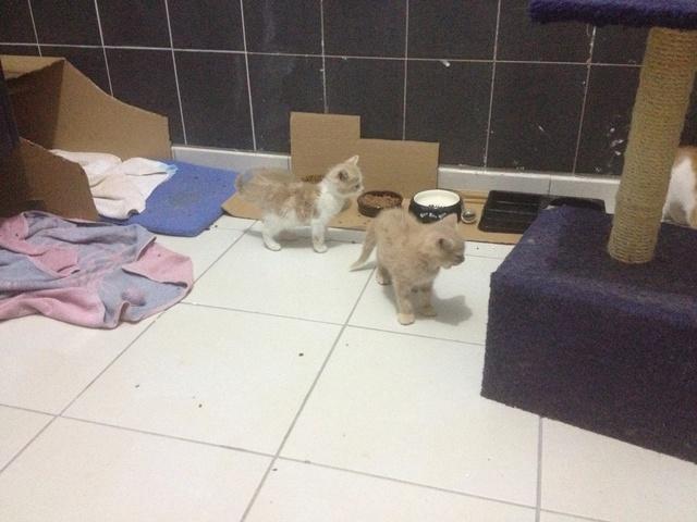 Portée 4 chatons Img_3226