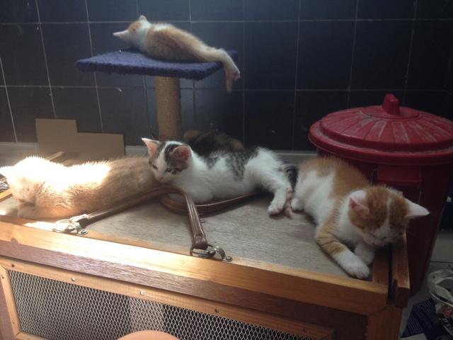 Portée 4 chatons Img_3227