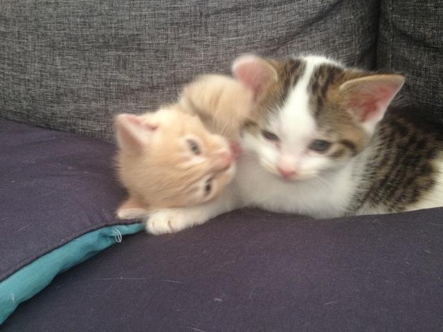 Portée 4 chatons Img_3236