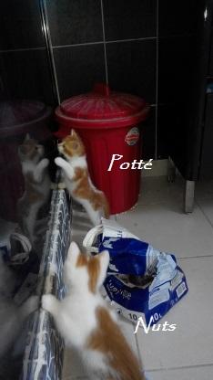 Potté Img_3269