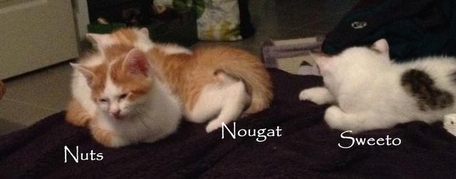 Nougat Img_3425