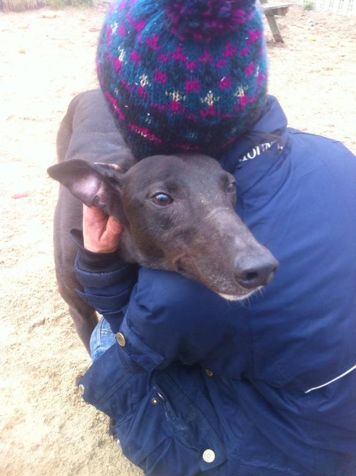 Max - 5 year old Black greyhound 19707210
