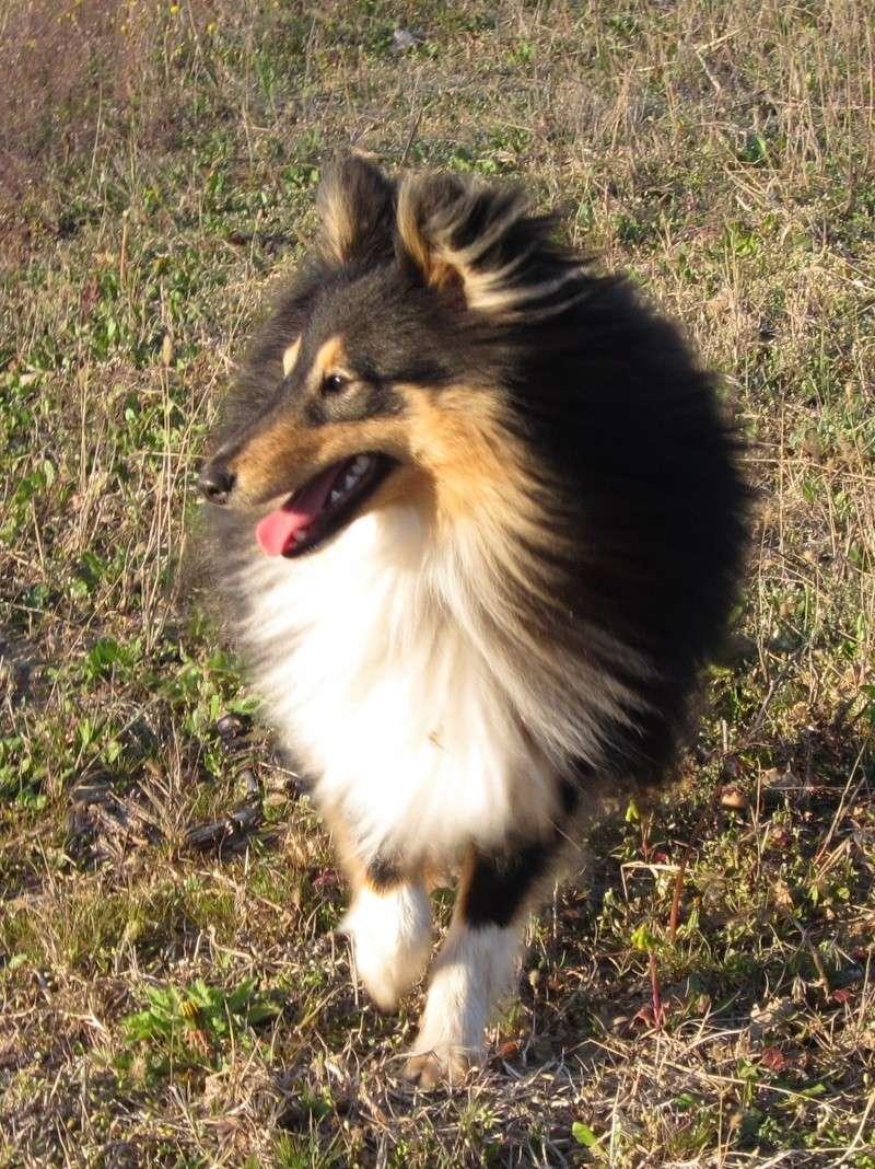 Découvrir des races de chiens? - Page 2 Img_4917