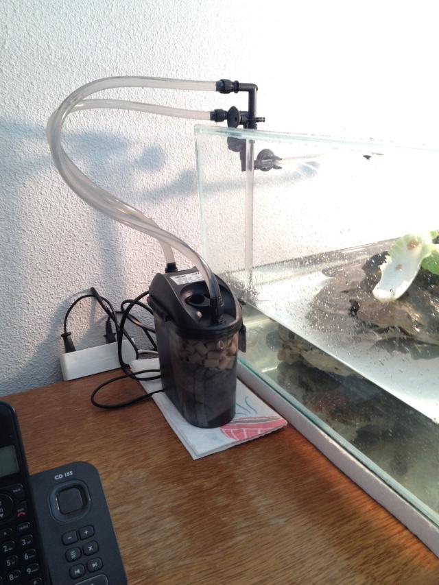 aquarium question sur pierres des landes Img_4715