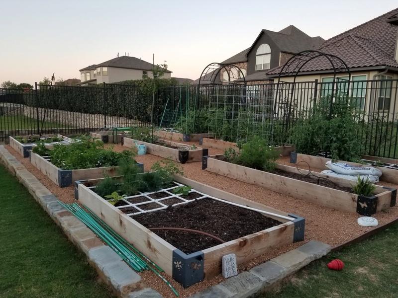 Texas Dream garden 2017 Garden16