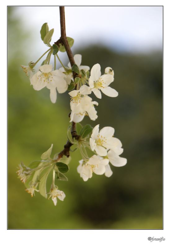 quelque fleur modestement Captur18
