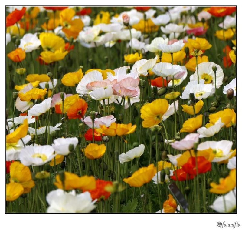 quelque fleur modestement Captur19
