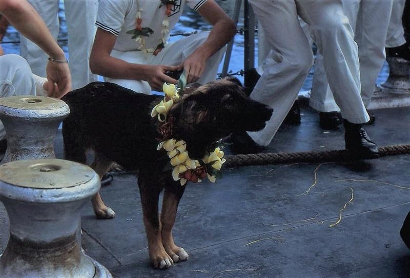 [ Les traditions dans la Marine ] LES MASCOTTES DANS LES UNITÉS DE LA MARINE - Page 30 Img64510