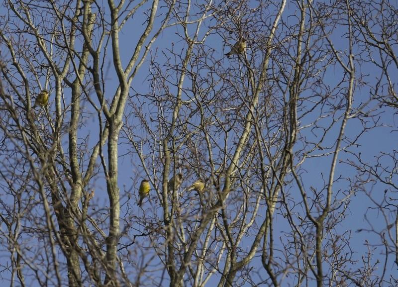 forêt de Nieppe hier Foryt_12