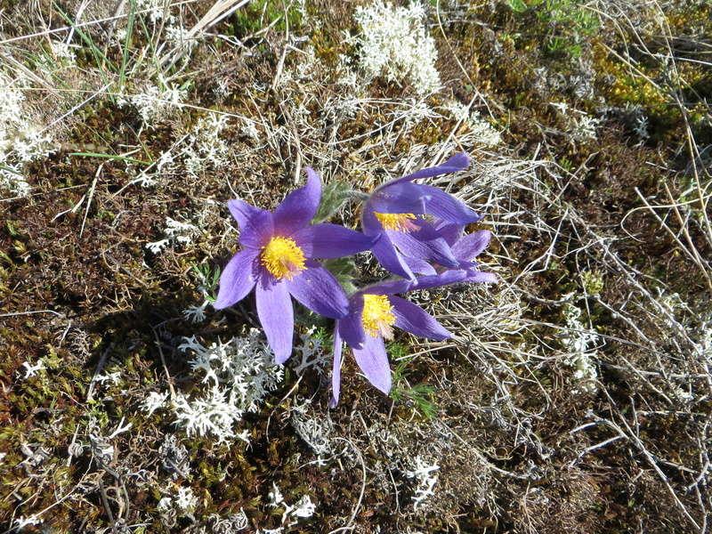 Erste Frühlingsboten im Garten und in Wald und Flur - Seite 49 Img_3611
