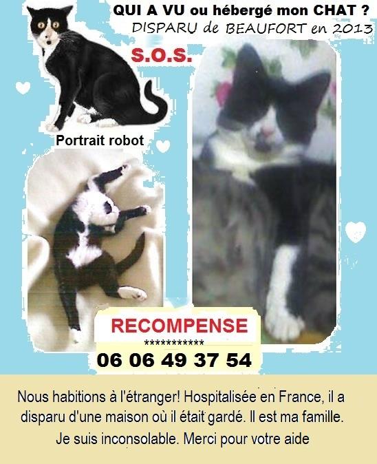 Félix chat noir et blanc pas identifié perdu dans le 31 5509a710