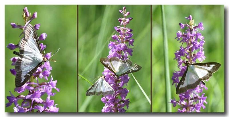 Pollinisateurs indésirables ? Fleur_10