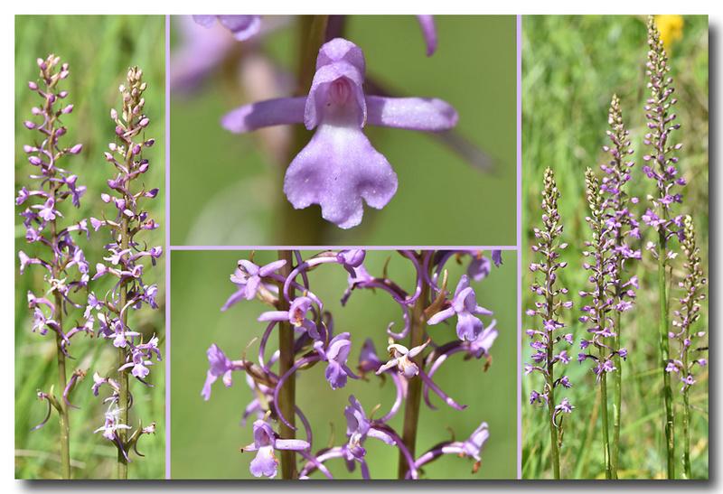 Pollinisateurs indésirables ? Fleur_11