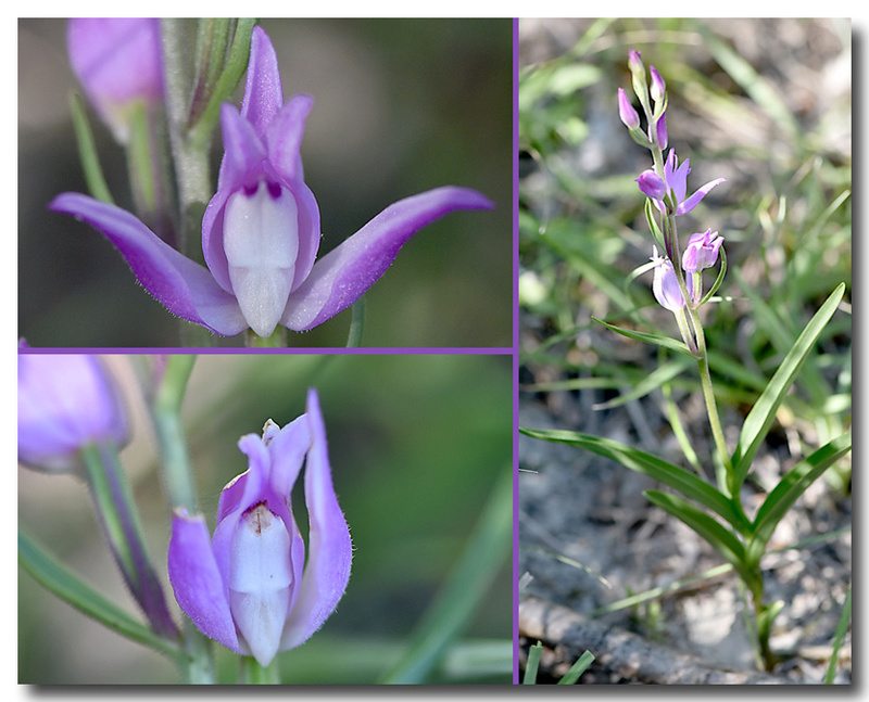 Pollinisateurs indésirables ? Orchid10